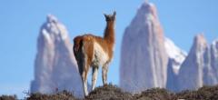 Awasi Patagonia - Wildlife