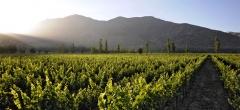 Casa Real: Vineyard