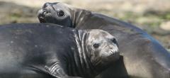 Faro Punta Delgada - Wildlife