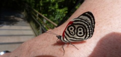 Janice and Charles - Iguazu Falls butterfly & me