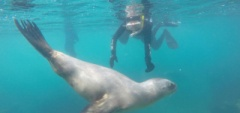 João and Petra swimming with seals