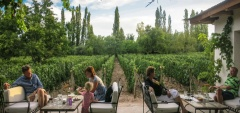 Finca Adalgisa - Vineyard terrace