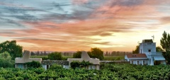 Cavas Wine Lodge - Vineyard
