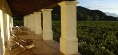Vinas de Cafayate Wine Resort - Vineyard view