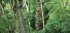 Inkaterra Reserva Amazónica- Jungle Canopy
