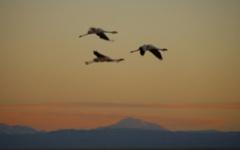 Flamingoes in the Atacama