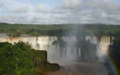 A wildlife bonanza - Iguazu Falls